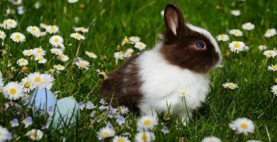 conejo felices pascuas
