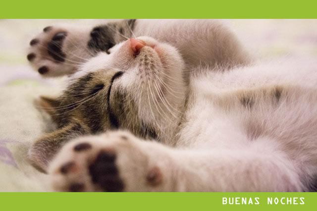 97 Frases De Buenas Noches Bonitas Y De Amor Para Compartir